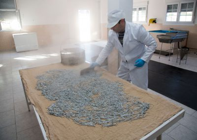 El maestro angulero extiende las angulas sobre una tela